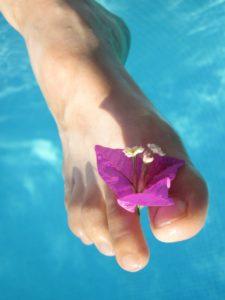 Fleur sur pied